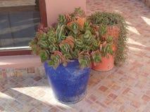 Plantas tropicais em uns potenciômetros coloridos em um terraço marroquino foto de stock royalty free