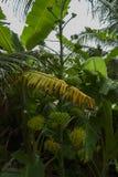 Plantas tropicais no fundo verde Imagens de Stock