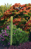 Plantas tropicais no jardim fotos de stock