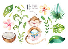 Plantas tropicais tiradas mão da aquarela ajustadas e macaco Folhas de palmeira, árvore exóticas da selva, elementos tropicos da  Fotos de Stock