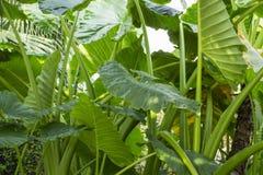 Plantas tropicais verdes 1 Fotografia de Stock Royalty Free