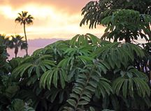 Plantas tropicais verdes luxúrias no por do sol foto de stock