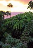 Plantas tropicais verdes luxúrias no por do sol fotografia de stock
