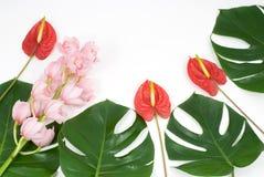 Plantas tropicales fotos de archivo