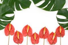 Plantas tropicales fotografía de archivo