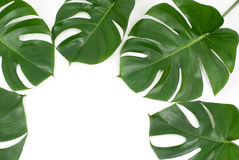 Plantas tropicales Foto de archivo libre de regalías