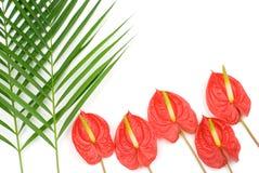 Plantas tropicales foto de archivo