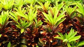 Plantas tropicales almacen de metraje de vídeo