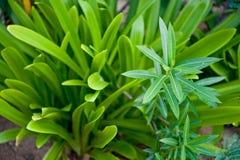 Plantas tropicales Fotos de archivo libres de regalías