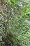 plantas tropicales con un verdor y colores radiantees en el pie de una pared de rocas coloniales imagenes de archivo