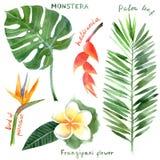 Plantas tropicales de la acuarela Imágenes de archivo libres de regalías