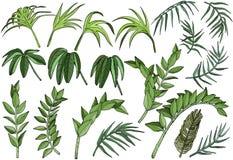 Plantas tropicales de la selva de la palma fijadas ilustración del vector