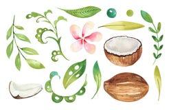 Plantas tropicales dibujadas mano de la acuarela fijadas Hojas de palma exóticas, árbol de la selva, elementos de la botánica del Imagenes de archivo