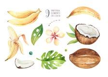 Plantas tropicales dibujadas mano de la acuarela fijadas Hojas de palma exóticas, árbol de la selva, elementos de la botánica del Imagen de archivo libre de regalías