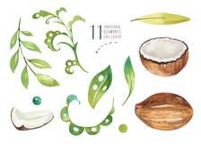 Plantas tropicales dibujadas mano de la acuarela fijadas Hojas de palma exóticas, árbol de la selva, elementos de la botánica del Fotografía de archivo libre de regalías