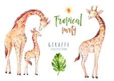 Plantas tropicales dibujadas mano de la acuarela fijadas y jirafa Hojas de palma exóticas, árbol de la selva, elementos tropicale fotos de archivo