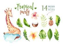Plantas tropicales dibujadas mano de la acuarela fijadas y jirafa Hojas de palma exóticas, árbol de la selva, elementos tropicale Fotografía de archivo libre de regalías
