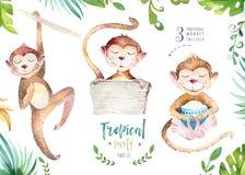 Plantas tropicales dibujadas mano de la acuarela fijadas y mono Hojas de palma, árbol exóticos de la selva, elementos tropicales  Imagen de archivo libre de regalías