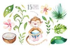 Plantas tropicales dibujadas mano de la acuarela fijadas y mono Hojas de palma, árbol exóticos de la selva, elementos tropicales  Fotos de archivo