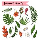 Plantas tropicales sistema, colección aislada en un blanco stock de ilustración