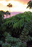 Plantas tropicales verdes enormes en la puesta del sol fotografía de archivo