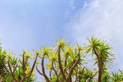 Plantas tropicales y cielo Día soleado en la isla tropical Plantilla de la bandera de las vacaciones de verano Imagenes de archivo