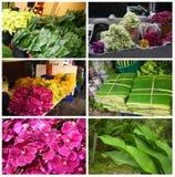 Plantas tropicales y flores Foto de archivo libre de regalías