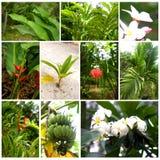 Plantas tropicales y flores Imágenes de archivo libres de regalías
