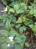 Plantas vegetais muito agradáveis em áreas rurais imagem de stock royalty free