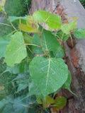 Plantas vegetais muito agradáveis em áreas rurais imagem de stock
