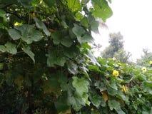 Plantas vegetais muito agradáveis em áreas rurais foto de stock royalty free