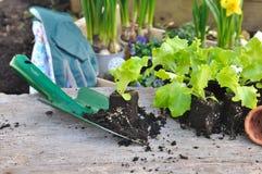 Plantas vegetais novas para a plantação Imagem de Stock
