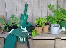 Plantas vegetales Imagen de archivo libre de regalías