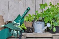 Plantas vegetales para el jardín Imagenes de archivo