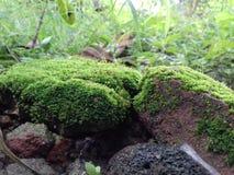 Plantas verdes foto de archivo libre de regalías