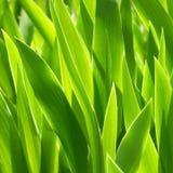 Plantas verdes. Imagenes de archivo