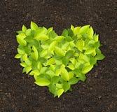 Plantas verdes foto de stock