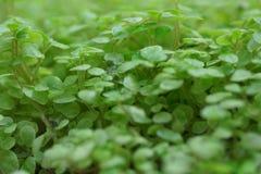 Plantas verdes. Fotografía de archivo libre de regalías