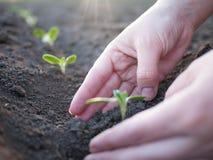 Plantas verdes Fotografía de archivo libre de regalías