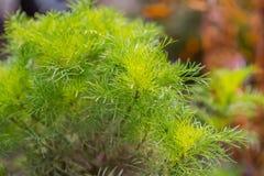 Plantas verdes Imagem de Stock