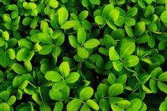 Plantas verdes Fotos de archivo libres de regalías