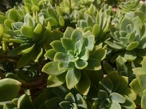 Plantas verdes imagem de stock royalty free
