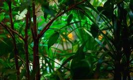 Plantas verdes Imágenes de archivo libres de regalías