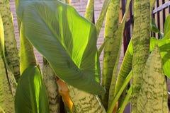 Plantas verdes Imagens de Stock