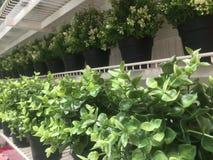 Plantas verdes Foto de Stock Royalty Free