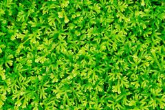 Plantas verdes Fotografia de Stock