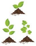 Plantas verdes Imagens de Stock Royalty Free