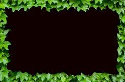 Plantas verdes adornadas como marco Fotografía de archivo libre de regalías