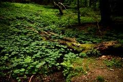 Plantas verdes bonitas Fotografia de Stock Royalty Free