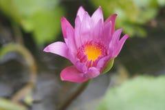Plantas verdes bonitas e flores coloridas fotos de stock royalty free